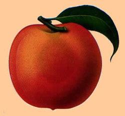 peachgeek